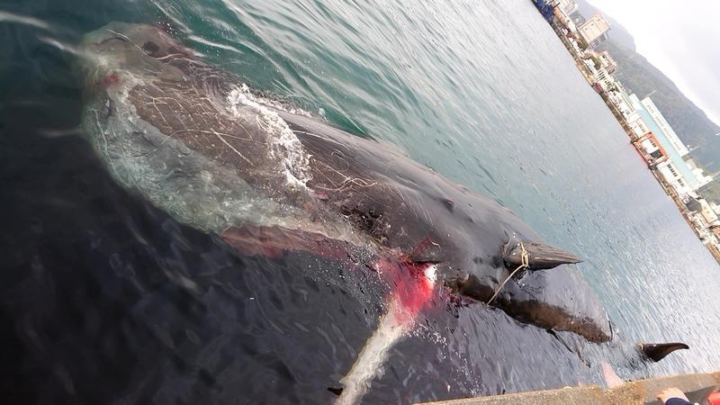 クジラ 天草