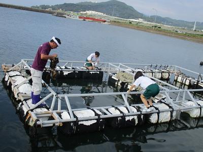 丸島港のいかだに戻します