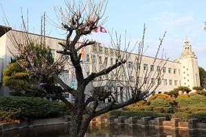 梅の木と白亜の殿堂